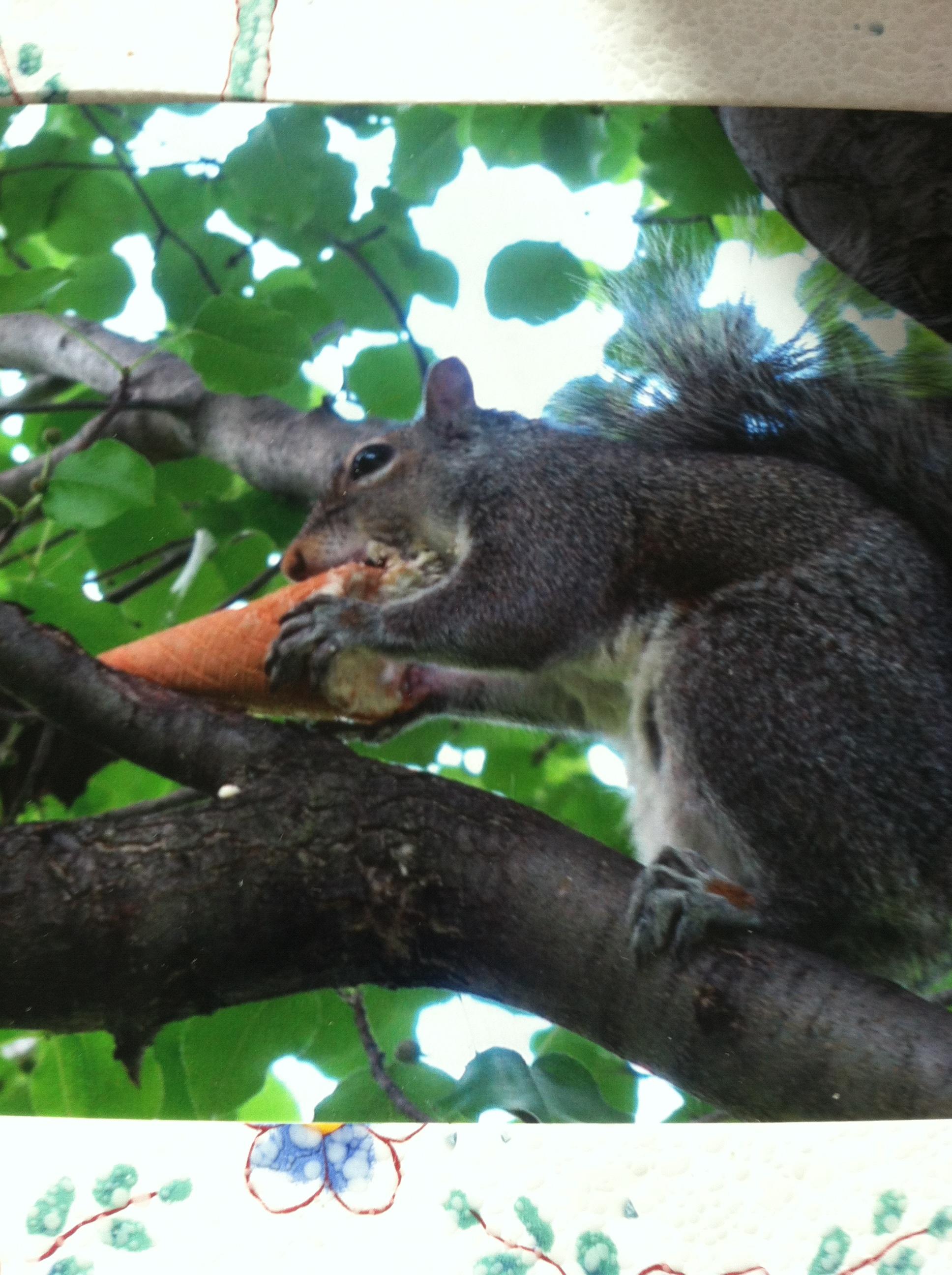 Saratoga Springs Squirrel